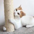 猫の爪にかぶせる「ネイルキャップ」付け方や問題点について