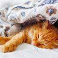 猫にとって快適な部屋 8つのポイントをご紹介!