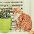 猫よけに効果のある5つの植物と栽培する時のポイント