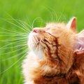 猫の目やにが赤い時の原因や考えられる病気、対処法