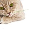 猫にニラを与えてはいけない理由と食べた時の対処法