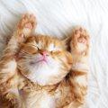 生後1ヶ月の猫の育て方と注意すべき点