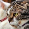 猫ちゃんたちの横顔を比べてみよう!個性や可愛らしさを発見♡