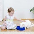 子猫のキャットフードの選び方と3つのポイント