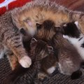 猫の親子はやっぱり最高!いつまでも見ていたい愛とモフの詰まった動…