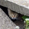 猫が死ぬ前に姿を隠すって本当?飼い猫の場合は?