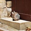 猫よけの効果的な方法とその注意点