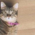 猫が突然ダッシュする理由と注意点