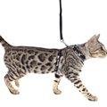 猫にハーネスを着ける意味とそのトレーニング方法