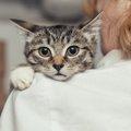 子猫にケージを使う4つの方法と守るべきルール