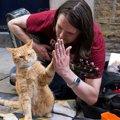 Laylaの猫コラム 「猫は飼い主を選んでやってくる」ボブという名の猫…