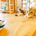 保護猫カフェの利用方法と譲渡について