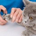 猫の爪の切り方とその必要性