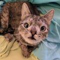 染色体異常の猫は、少し普通の猫とは違うけれども…