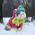 猫は体温調節をどこでしている?温度管理と注意する事