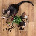 なにが不満?猫がわざと「粗相」する心理5つ