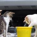 3匹寄れば文殊の知恵?猫ちゃんズ、魚を狙って試行錯誤!