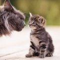 猫が『強烈に臭い時』に考えられること4つ!もしかしたら病気になっ…