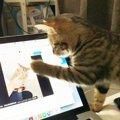 ちゅ~るで劇的ビフォーアフター!猛獣猫になった子猫ちゃんが話題!