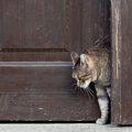 猫がドアを勝手に開けるのを防ぐドアストッパー オススメの商品6選