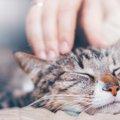 飼い主が緊急入院になったら愛猫はどうなってしまうのか