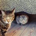 猫が飼い主に『嫉妬』している時にする行動5選!愛猫もこんなアピー…