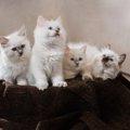 ふかふかの猫が大集合!思わずモフモフしたくなる画像6選