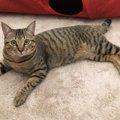 猫の咳からわかる意外な原因…セカンドオピニオンの大切さ