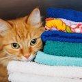 猫にとって柔軟剤が危険な理由と安全な商品5選