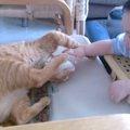 赤ちゃんに指導をする猫ちゃん