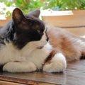 猫の暑さ対策 家庭で出来る3つの方法と注意点