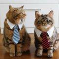 タレント猫の寅次郎にそっくりな相方がやってきた!!