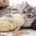 猫が誤飲しやすい物の特徴や飲み込んだ時の症状、対処法まで
