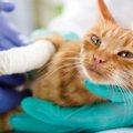 猫がやけどした時の応急処置や症状について