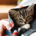 猫の見た目や行動では『気づきにくい病気』5つ!初期症状や絶対すべき…