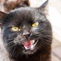 猫が嫌いな人にする『鳴き方』5選