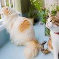 猫の脱走防止におすすめのラティス5選!玄関やベランダに設置しよう