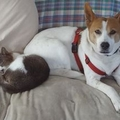 盲目のお婆ちゃん猫を保護!愛犬とも仲良しで毎日楽しそうです♡