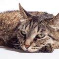 『ストレスがたまっている猫』がする5つの仕草・行動