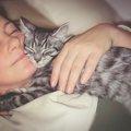 猫がひきつけを起こした時の症状と対処法