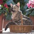 シクラメンは猫にとって危険な植物!理由と食べてしまった時の対処法