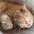 猫が『衰弱』している時の仕草5つ