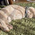 猫の『寝相』でわかる性格診断5つ!眠り方の癖でわかる特徴とは?