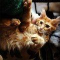 愛猫と仲良く暮らす方法とオススメのグッズ