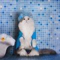 猫をお風呂に入れるタイミングとオススメ便利グッズ!
