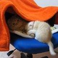 「私もそこで寝たいにゃ!」成猫VS子猫の争いが愛らしすぎる❤