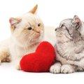 猫のフェロモンがもつ3つの役割と特徴