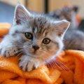 猫の蓄膿症の原因、副鼻腔炎とは?原因から予防法まで