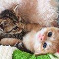 子猫の体重が増えない時の2つの対処法、考えられる病気