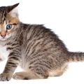 猫の寄生虫!種類から症状、そして駆除方法まで詳しくご紹介
